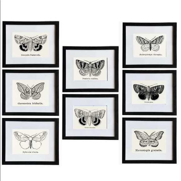 8 Framed Butterfly Prints